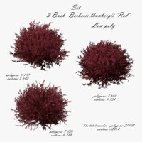 barberry thunberg red 3D model