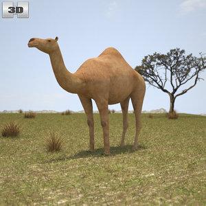 dromedary 3D model