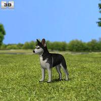 3D model siberian husky sibe