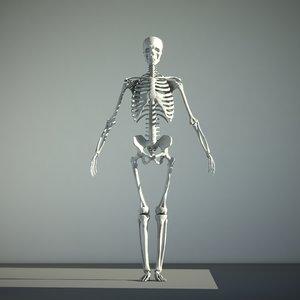 resolution human skeleton 3D model