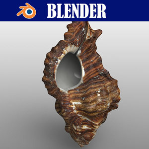 seashell sea shell 3D