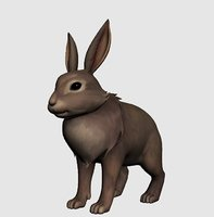 3D model rabbit realistic