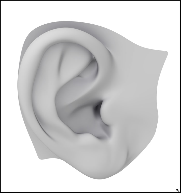 ready ear human 3D model