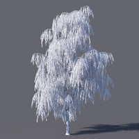 frozen birch model