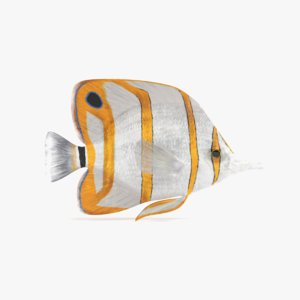 3D copperband butterflyfish model