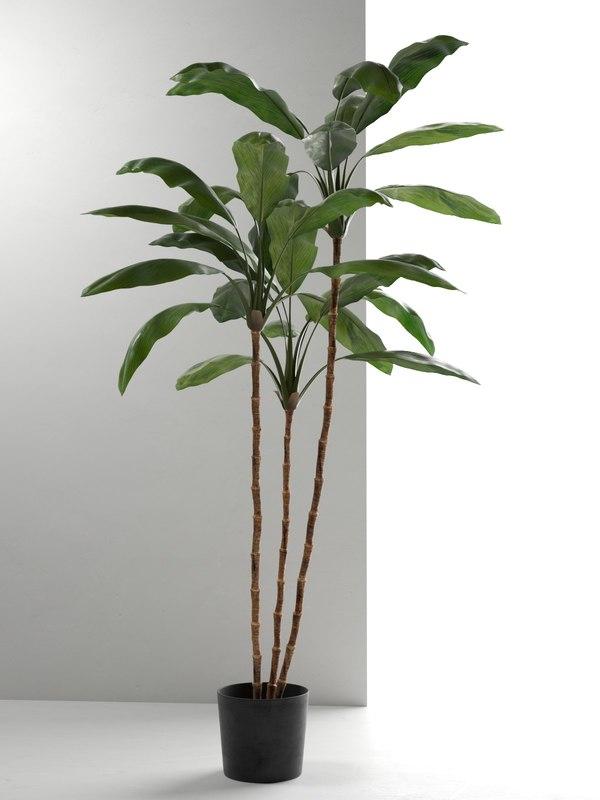cordyline plant 3D model