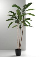 cordyline plant 3D model