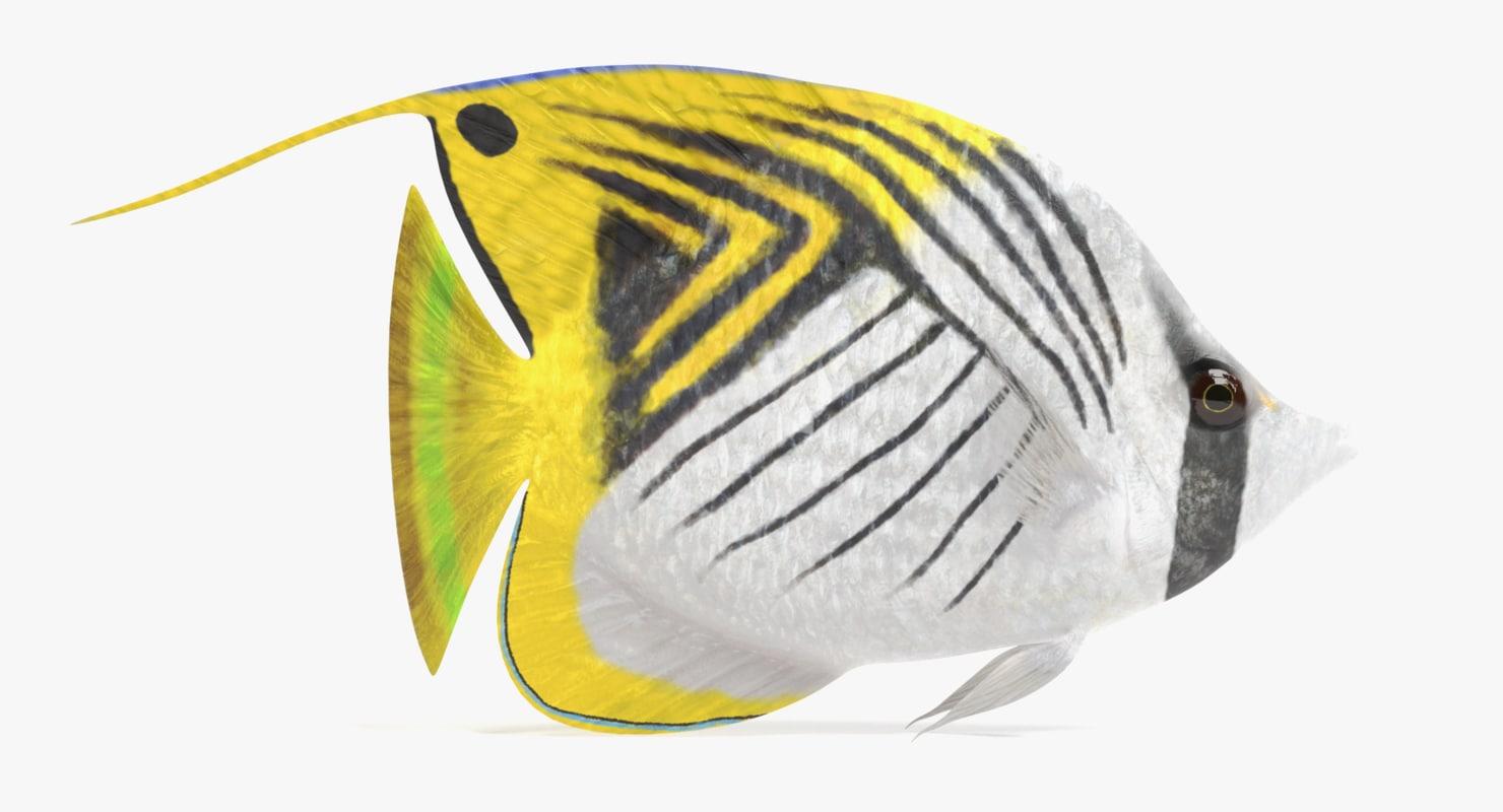 3D threadfin butterflyfish