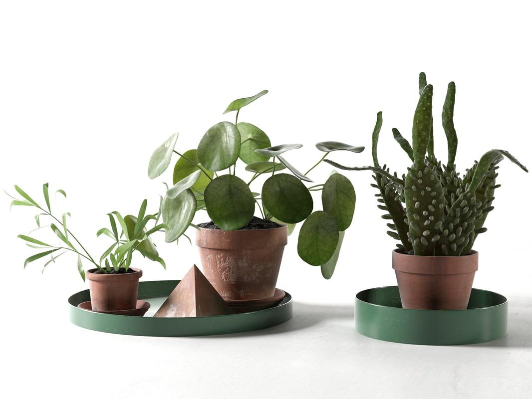 trays pot plants model