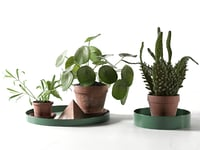 trays pot plants model