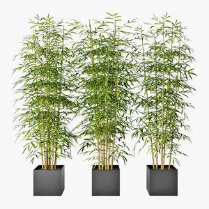 3D bamboo plant