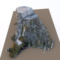 3D scan old tree stump