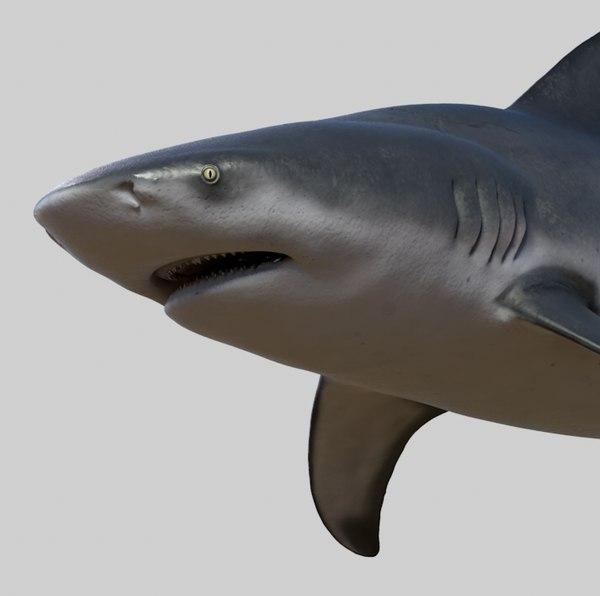 3D model realistic bull shark