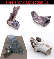 3D model scan tree trunk stump