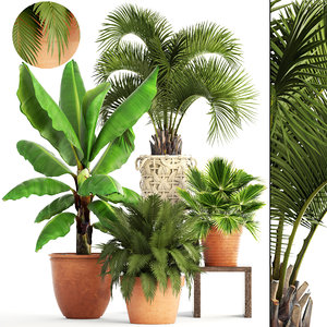 3D plants brahea edulis