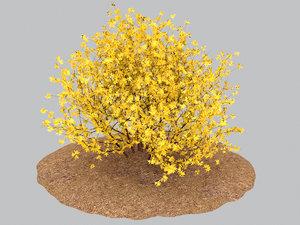 3D forsythia spring flowering