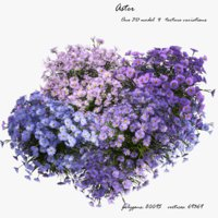 aster flowers 3D