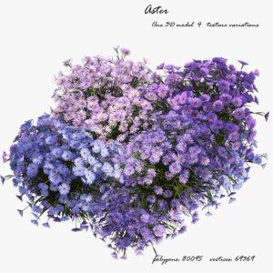 aster flowers 3D
