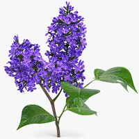 realistic lilac branch 3D model