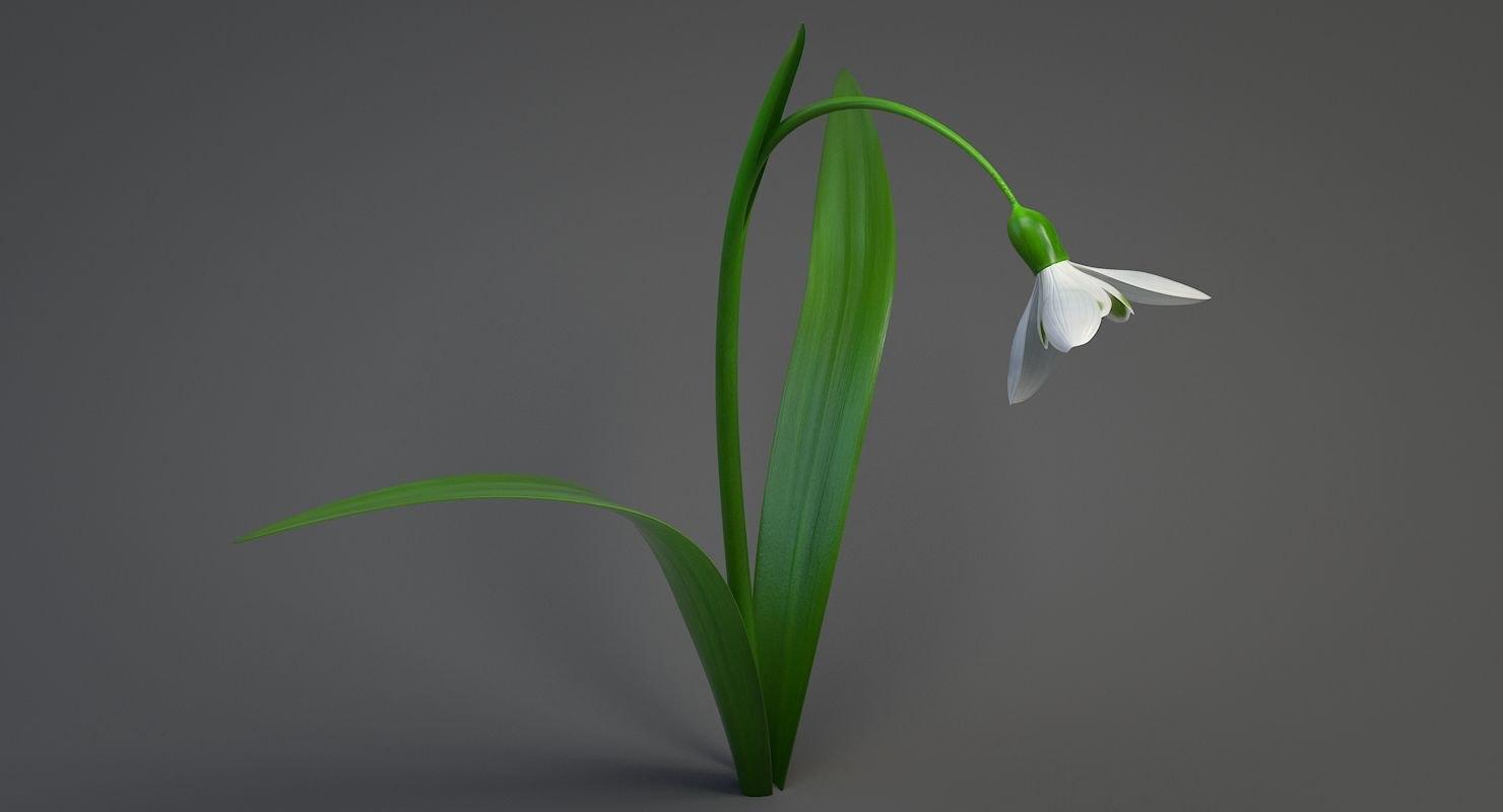 3D realistic snowdrop flower