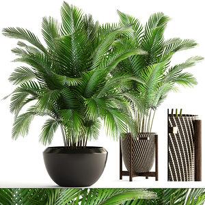 plants areca palm 3D
