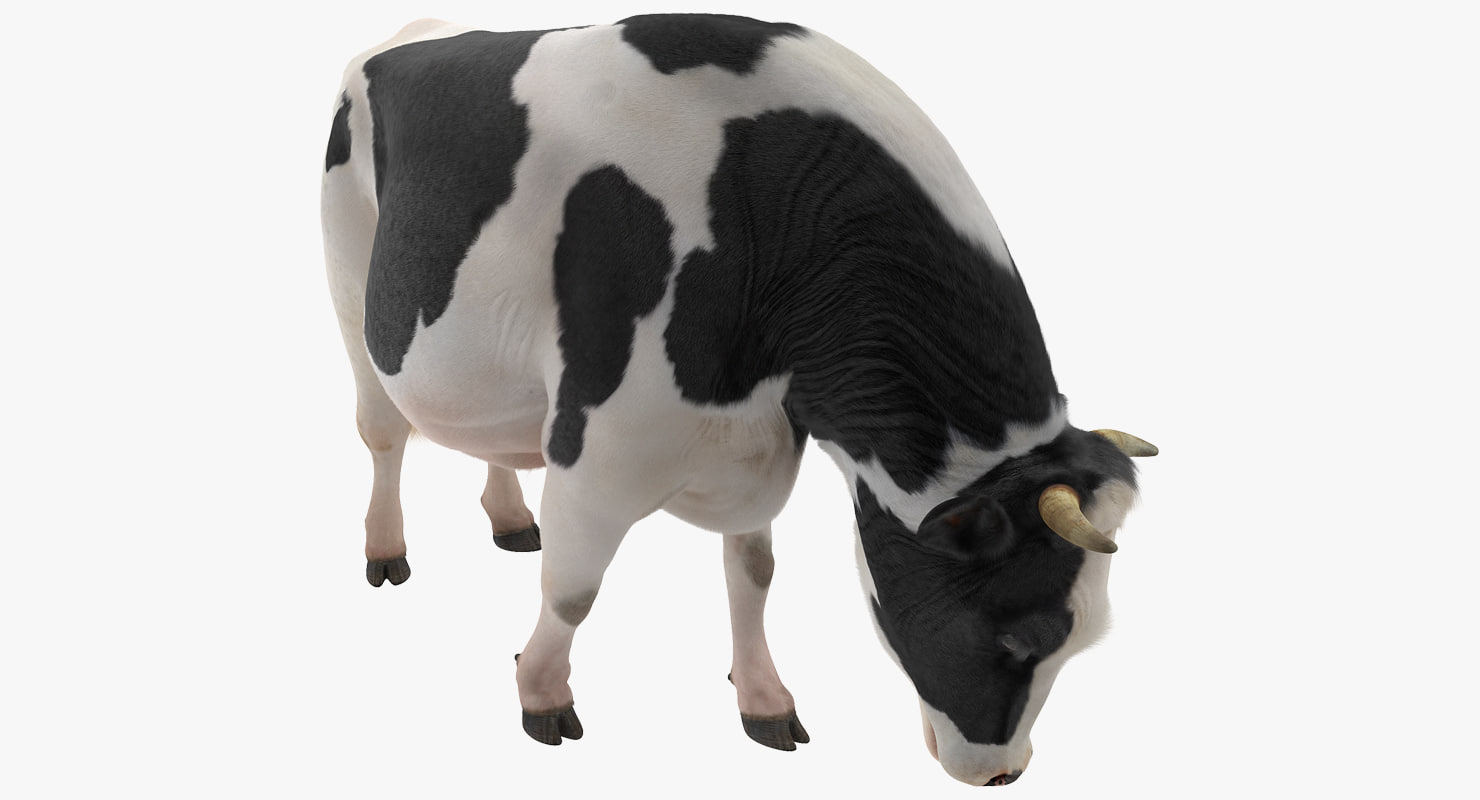 dairy cow eating pose 3D model