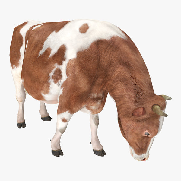 3D holstein cow eating pose