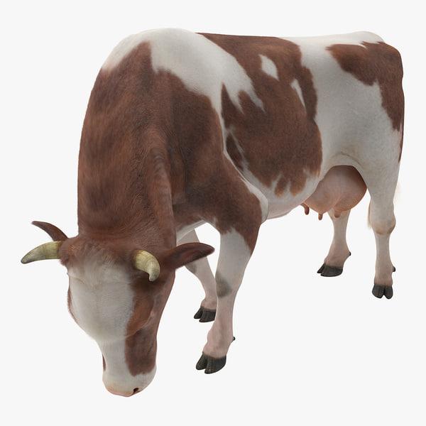 3D holstein cow eating pose model