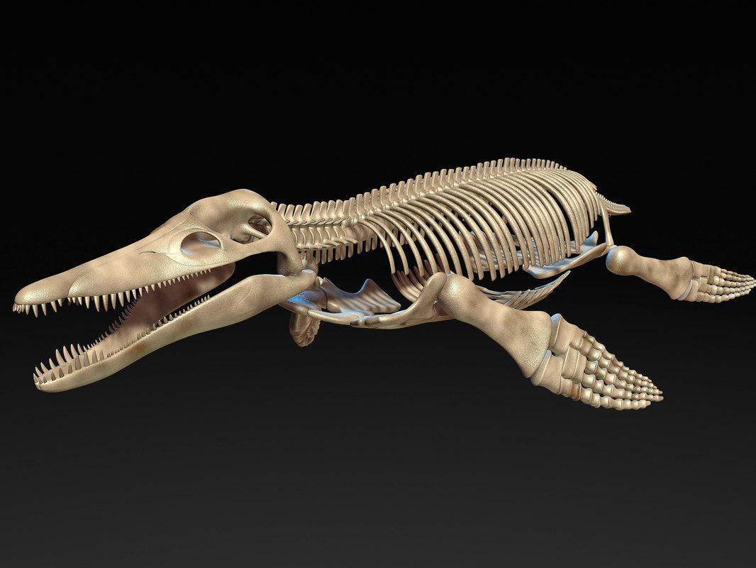 kronosaurus pliosaur skull skeleton model