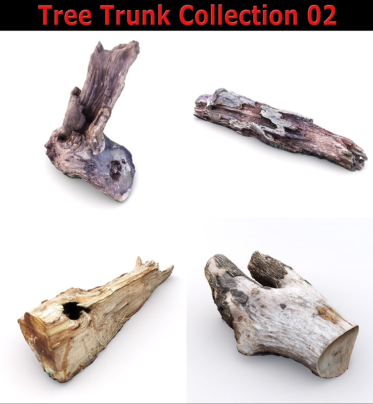 3D scan tree trunk