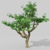 3D tree real time model
