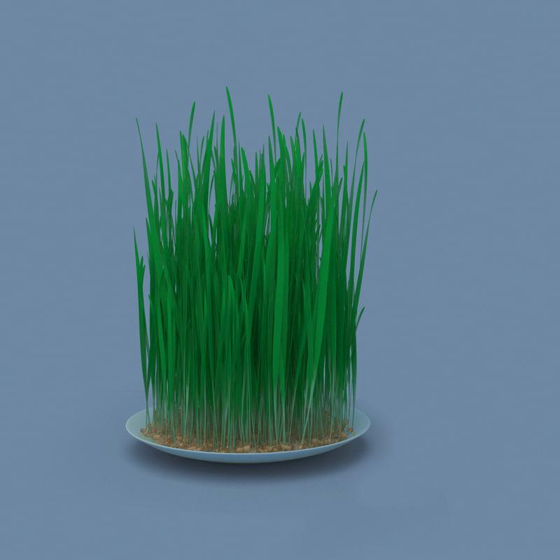 3D model samani sama