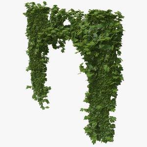 ivy plant nature 3D