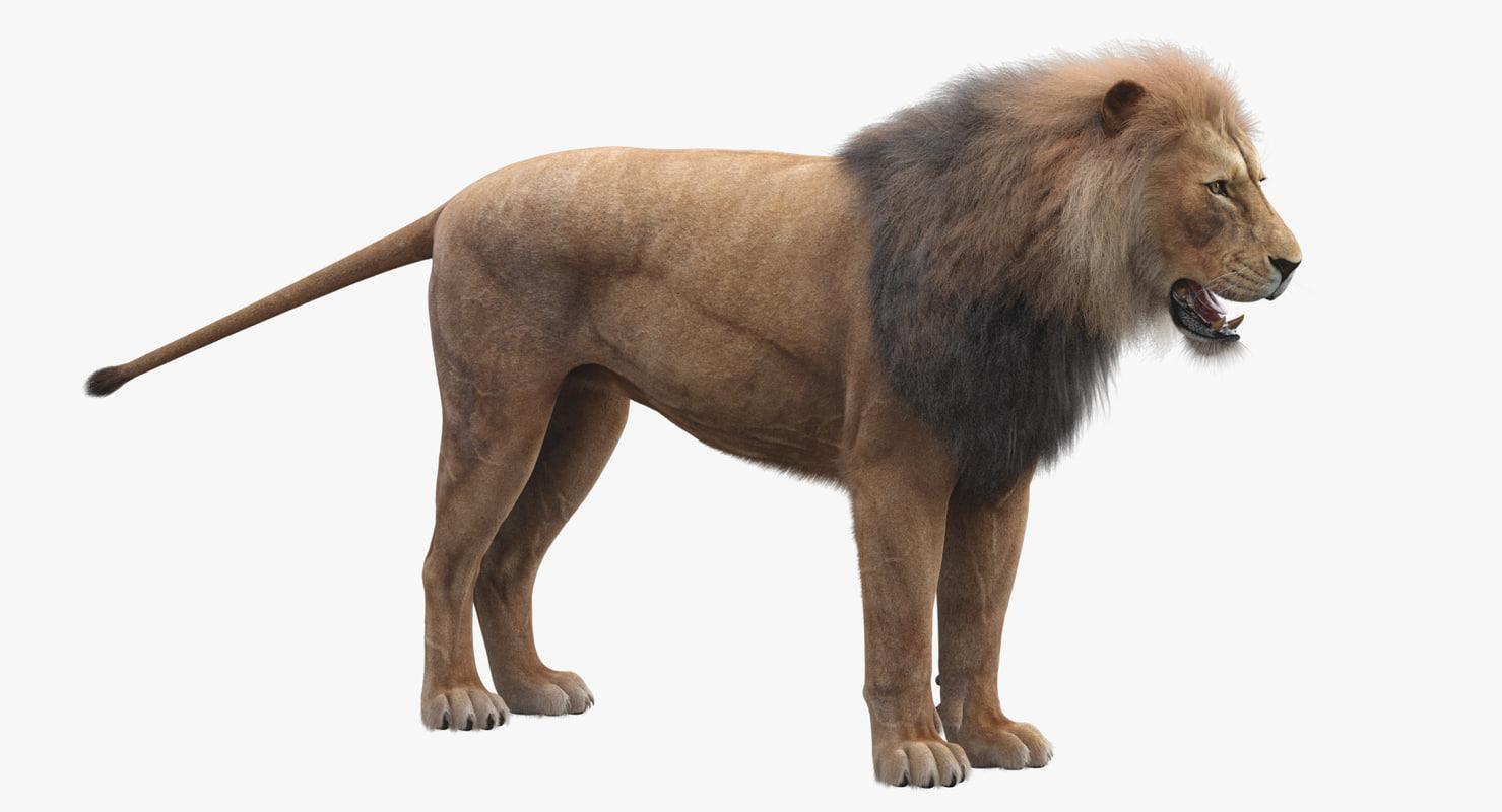 3D realistic lion fur