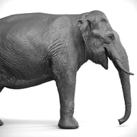 3D elephant asian