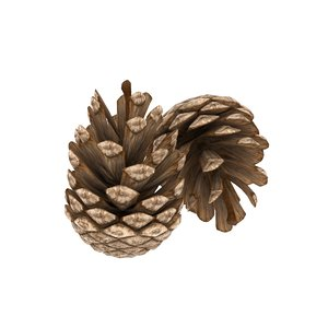 3D pine cones