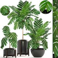 3D palms plants model