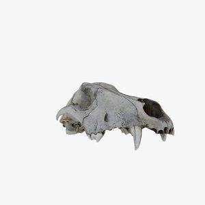 dog skull 3D
