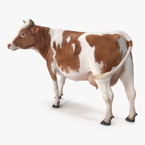 3D model red white cow