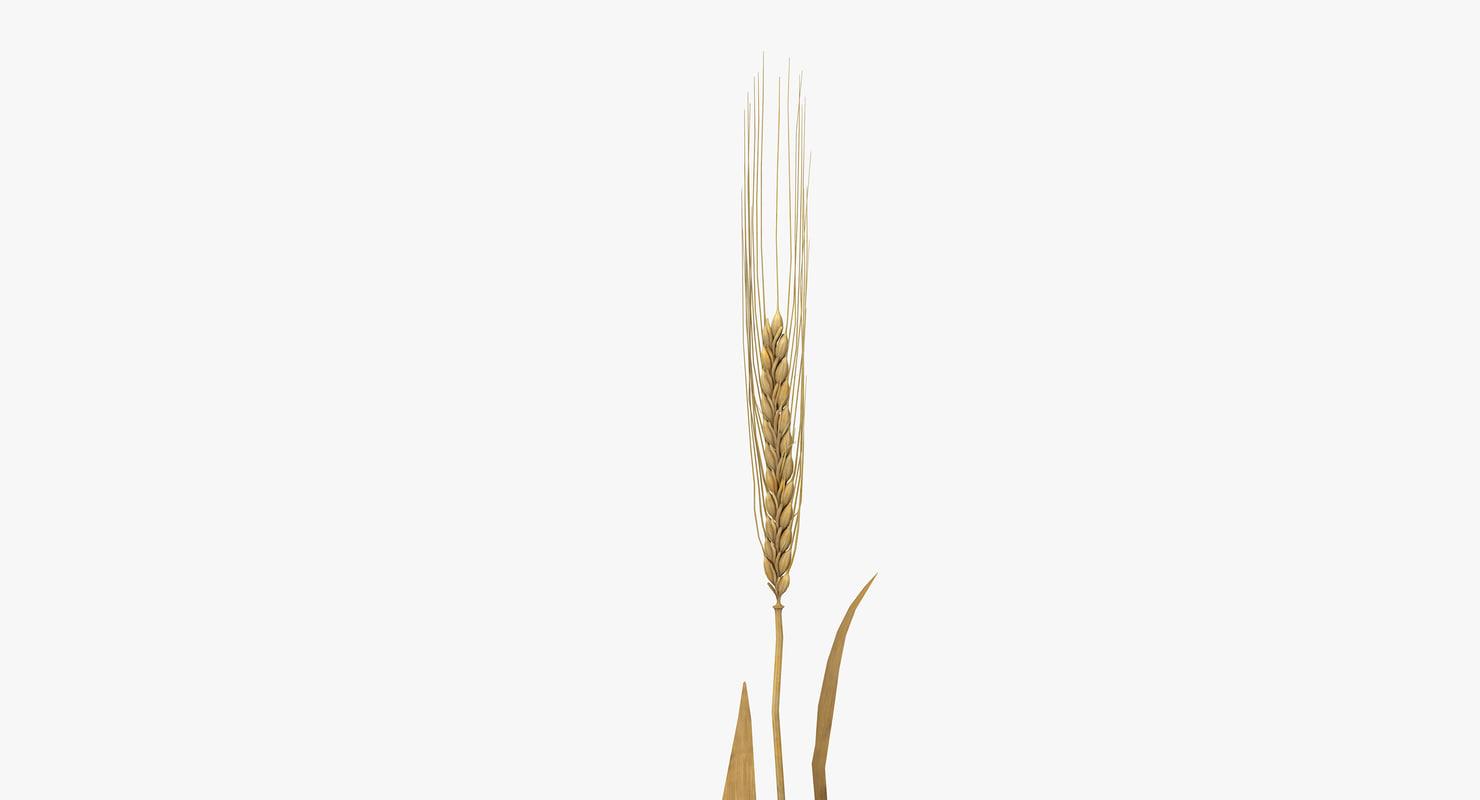 3D barley