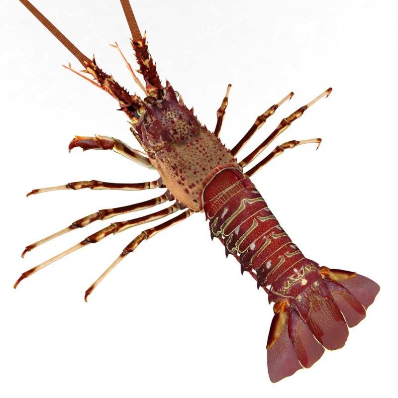 lobster crustacean fish 3D model