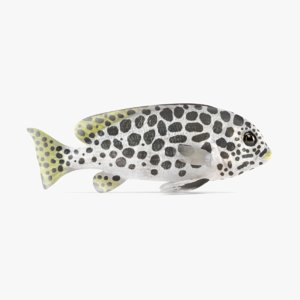 andaman sweetlips 3D model
