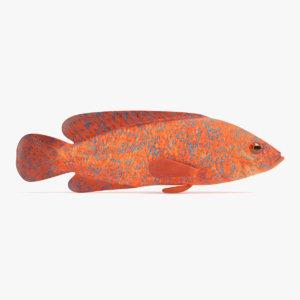 3D model coral grouper