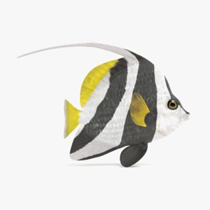 longfin bannerfish 3D model