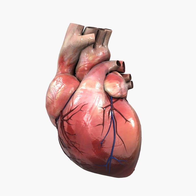 3D human heart medical animation
