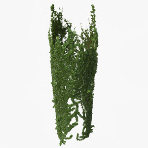 3D ivy plant nature model