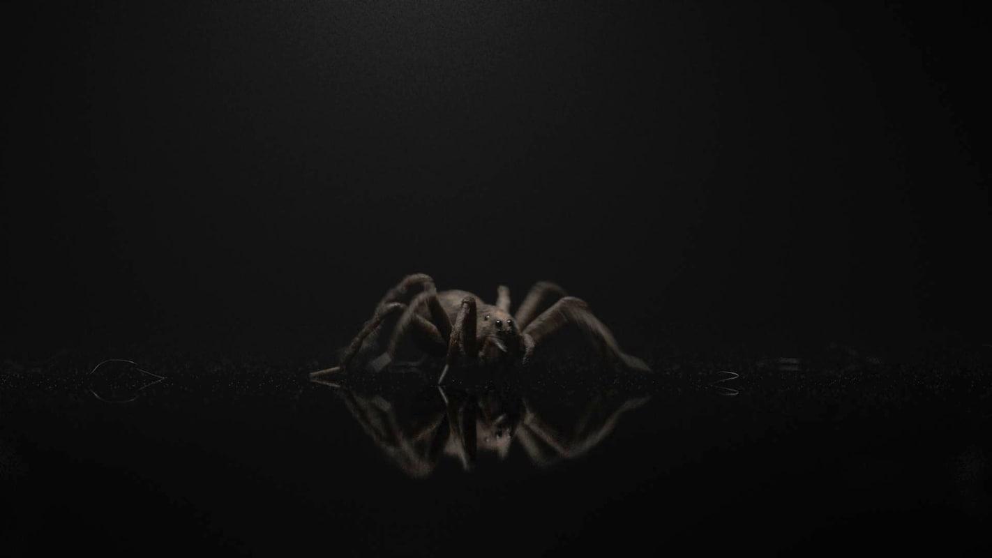 wolf spider 3D model