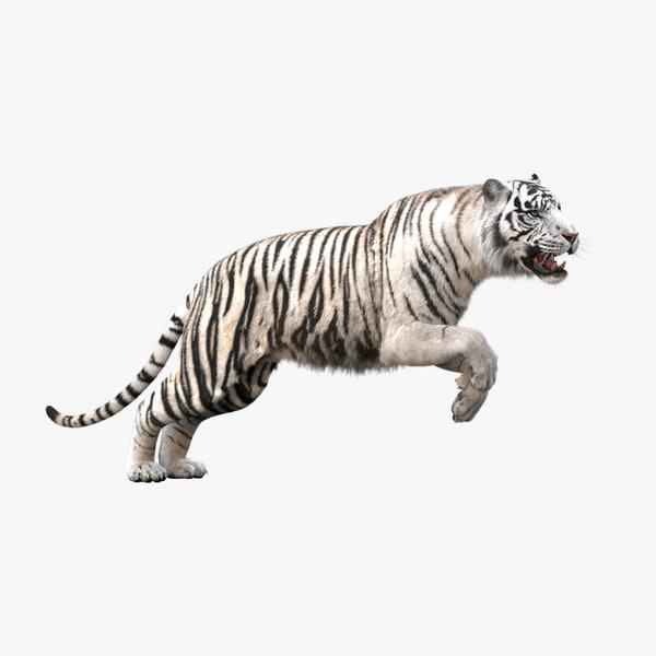 3D realistic tiger fur animation teeth