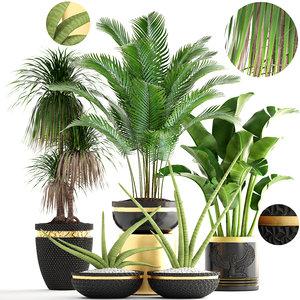 3D plants sansevieria cylindrica