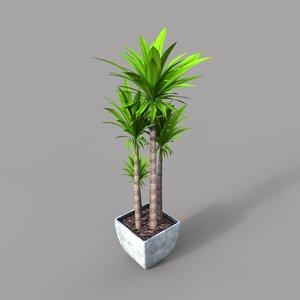 tropical plant 3D